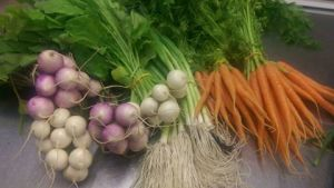 Carrots, turnips and spring onions with tops on
